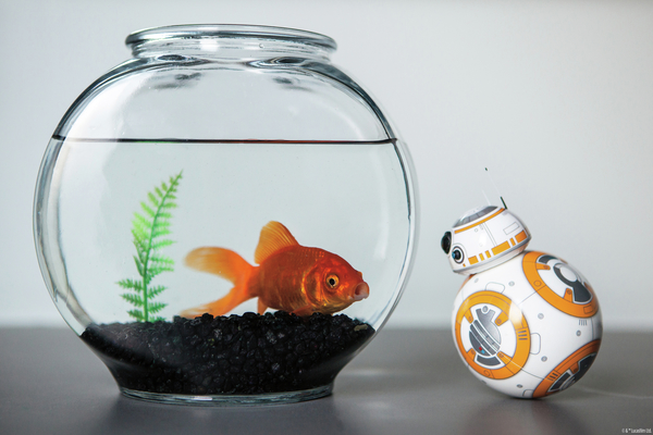 bb8_goldfish_1_legal_600_401