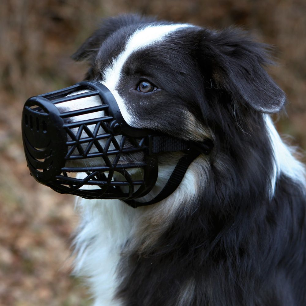 kaganiec dla psa