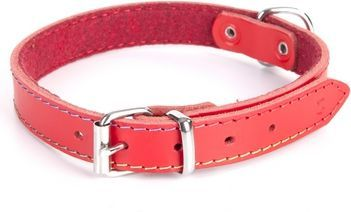 Dingo obroża skórzana podszyta filcem szer. 1,0 cm dł. 36 cm czerwona 1