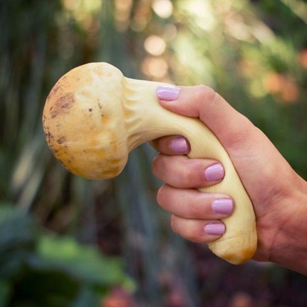 GiftWorld Antystresowy grzyb - BOCZNIAK 1