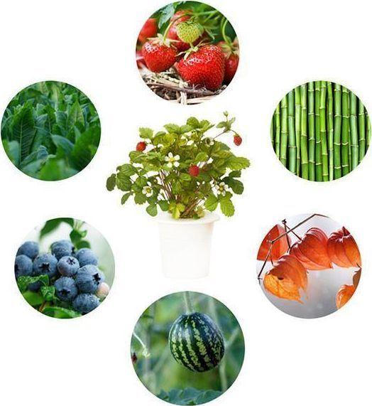 Click And Grow Click&Grow Kapsułki z nasionami Smart Soil Eksperymentalny 3pak 1