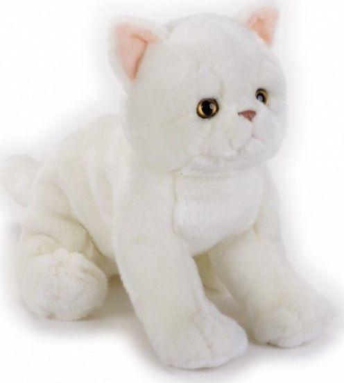 Dante Pluszak Kot egzotyczny National Geographic 1