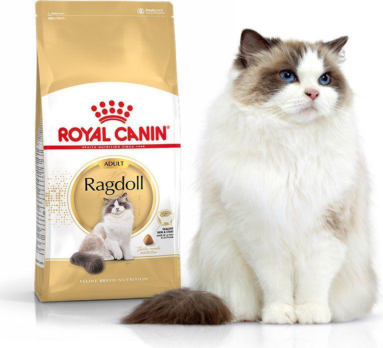 Royal Canin Ragdol Adult karma sucha dla kotów dorosłych rasy ragdoll 10kg 1