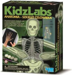 4M Anatomia szkielet człowieka - 3375