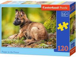 Castorland Puzzle 120 Elementów Szczeniak w lesie (GXP-577227)