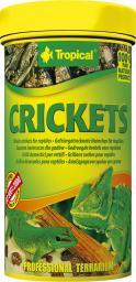 Tropical Pokarm dla gadów Crickets puszka 250ml/6szt (11194)
