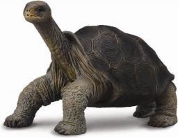 Figurka Collecta Żółw z Wyspy Pinta (004-88619)