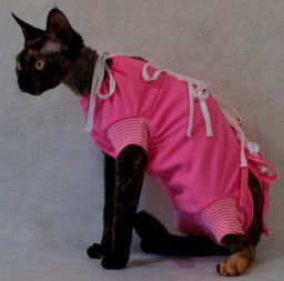 GRANDE FINALE Koszulka pooperacyjna dla kota czerwona 25cm