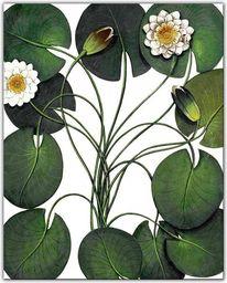 Art-Pol Reprodukcja - Lilie wodne G97187 (242822)