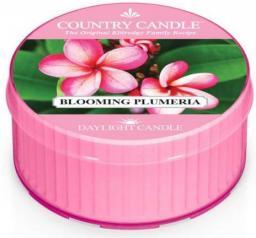 Country Candle Świeca zapachowa Daylight Blooming Plumeria 35g