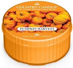 Country Candle Świeca zapachowa Daylight Pumpkin Harvest 35g