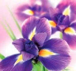 Artnuvo Karnet kwiatowy KW FF10