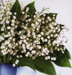 Artnuvo Karnet kwiatowy KW FF87