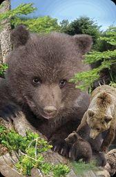 Worth Keeping Minikartka 3D - Niedźwiedź brunatny