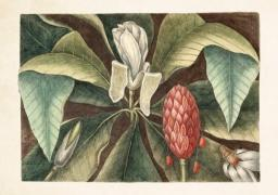 Skona Ting Karnet ST298 B6 + koperta Magnolia