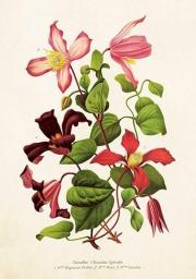 Skona Ting Karnet ST275 B6 + koperta Kwiat klementynki