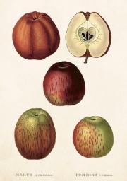 Skona Ting Karnet ST253 B6 + koperta Jabłko