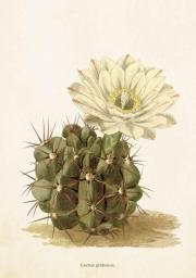 Skona Ting Karnet ST265 B6 + koperta Kaktus