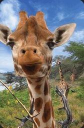 Worth Keeping Mini kartka 3D Żyrafa