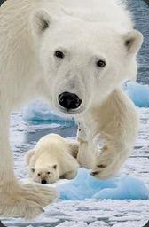 Worth Keeping Mini kartka 3D Niedźwiedź Polarny z młodym