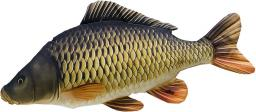 Gaby Poduszka Ryba Karp Pełnołuski Mini 36cm