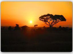 Plakat metalowy Feeby Wydruk na metalu, afrykański zachód słońc 30x20