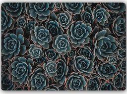 Plakat metalowy Feeby Wydruk na metalu, agawa meksykańsk 30x20