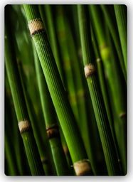 Plakat metalowy Feeby Wydruk na metalu, bambusowy las 20x30