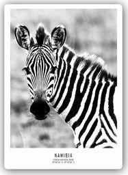 Plakat metalowy Feeby ciekawska zebra 20x30