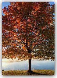 Plakat metalowy Feeby drzewo jesieni 20cmx30cm