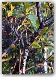 Plakat metalowy Feeby gałązka krzewu  20cmx30cm