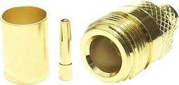Tajwan Gniazdo N żeńskie Gold na kabel H1000