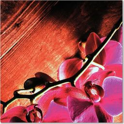 Feeby Deco Panel, Różowe storczyki 1 30x30