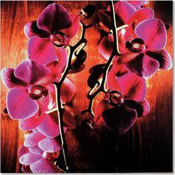 Feeby Deco Panel, Różowe storczyki  30x30