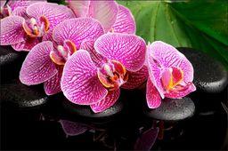 AC Fototapeta Orchidea SPA flizelina 130g 90x60
