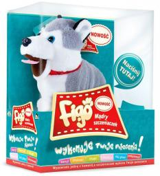 Madej Pies reagujący na komendy Husky FIGO MADEJ (3060062603)