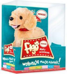 Madej FIGO Pies reagujący na komendy Labrador - 3060062604
