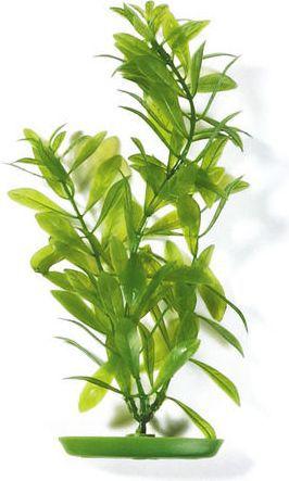 HAGEN Roślina Hygrophila-zielona 30cm