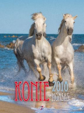 Avanti Kalendarz 2018 Konie (KSM-5)
