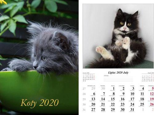 Radwan Kalendarz 2020 Koty 7 planszowy RADWAN