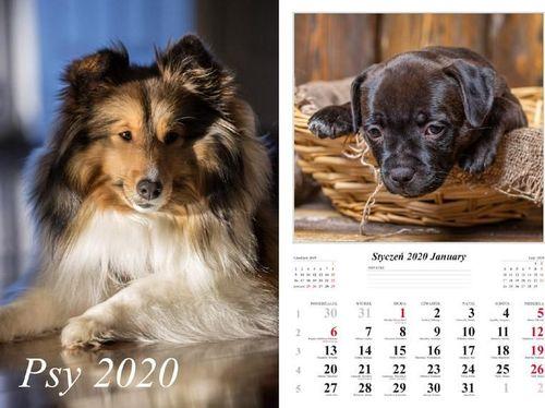 Radwan Kalendarz 2020 Psy 13 planszowy RADWAN