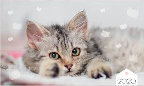 Interdruk Kalendarz 2020 trójdzielny Koty