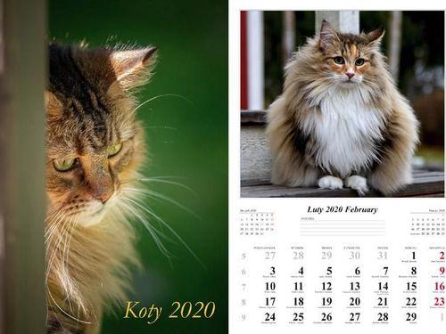 Radwan Kalendarz 2020 Koty 13 planszowy RADWAN