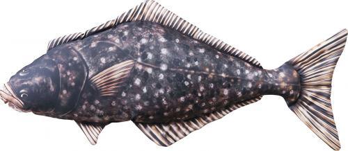 Gaby Poduszka Ryba Halibut 72cm