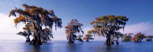 Heye HEYE 1000 EL. Bald Cypresses, E.Humboldt - 29607