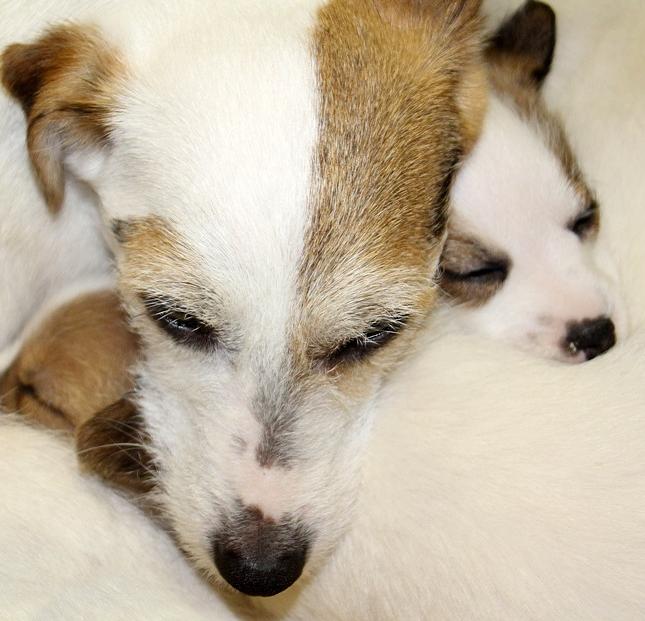 pies i szczeniak