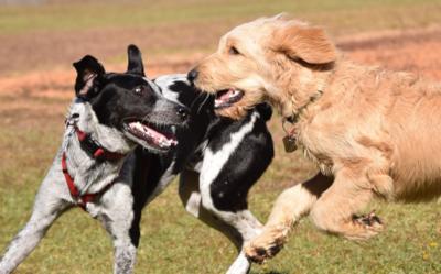 Jaki Pies Do Bloku Jaka Rasa Psa Do Małego Mieszkania Wiadomości