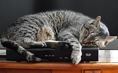 Kot W Domu Za I Przeciw Jak Zrozumieć Kota Wiadomości