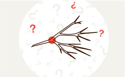 Rozdrabniacz do gałęzi - jak wybrać? Jaka rozdrabniarka najlepsza?