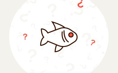 Łowienie ryb – jak zacząć? O czym należy wiedzieć?
